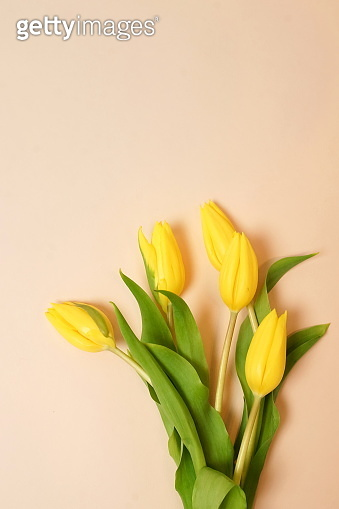 Flowers background. Bouquet of yellow tulips on beige background top view, copy space. Floral pastel color backdrop.