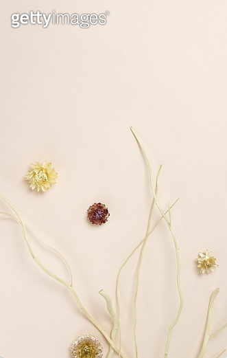 Dry branches and flowers on a beige background top view with copy space. minimal floral card.