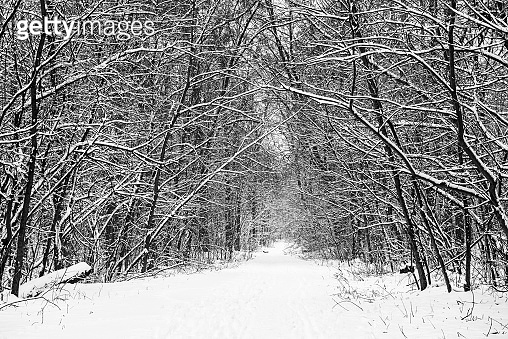 Winter forest with path