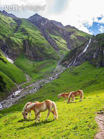 Idyllic Mountain Landscape Horses Meadow Alps Sunshine Vertical