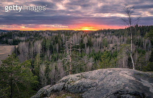 Scenic forest landscape with tranquil mood and idyllic sunset at spring evening in Finland