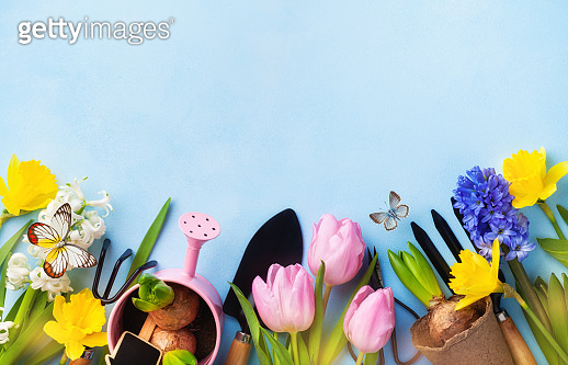 Beautiful springtime border background with gardening tools, colorful spring flowers and butterflies. Top view.