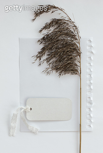Creative layout reed branch, tag and empty sheet of paper
