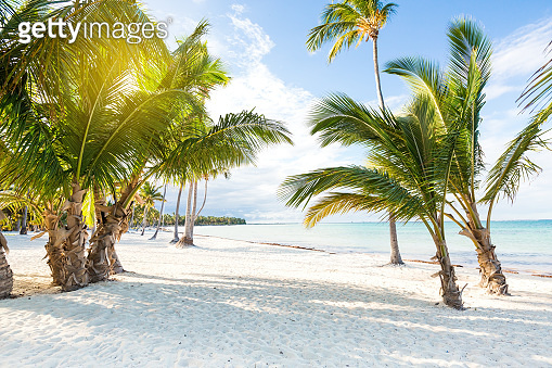 Coconut palm trees at pristine bounty beach