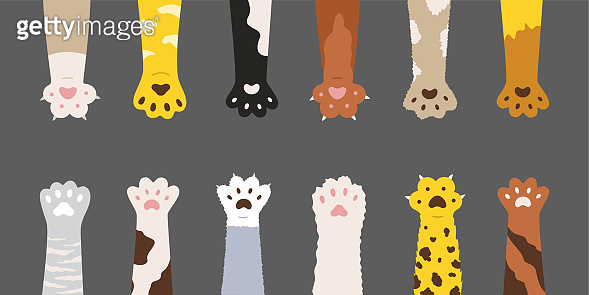 Fluffy multicolored cats paws set