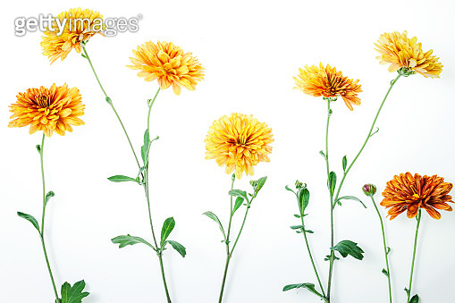 Flowers composition from chrysanthemum flowers
