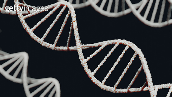 DNA Structure Double Helix Model