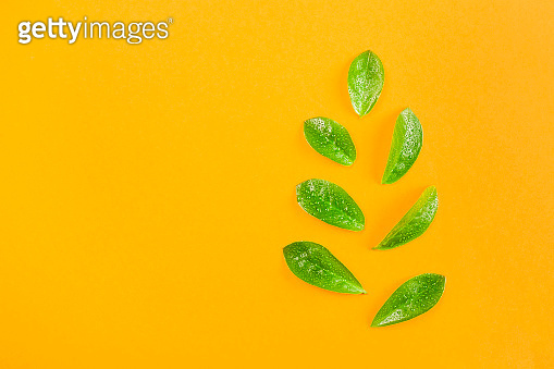 Bright juicy green leaves with drops of water on a yellow background.