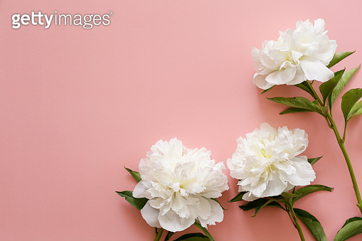 Beautiful floral composition with tender flowers. Women's holiday background concept.