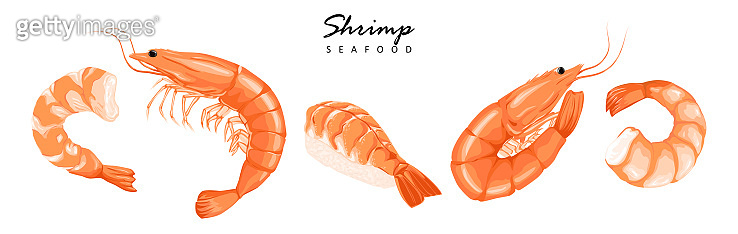 Shrimps, shrimps without shell, shrimp meat. Shrimp prawn icons set. Boiled Shrimp drawing on a white background.