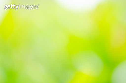 closeup green plant leaf nature fresh abstract greenery blur bokeh background with copy space in garden use for backdrop or wallpaper.