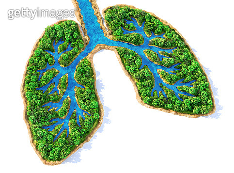 Eco concept. Trees with river in form of human lungs on a white background. 3d illustration