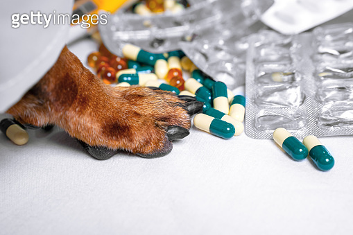 Close up of a dog paw sorting out various pills on a white table. The concept of pharmacy, medicine and treatment.