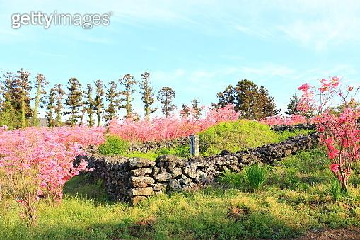 rural, village, spring, spring flowers, flowers, neighborhood, sea,