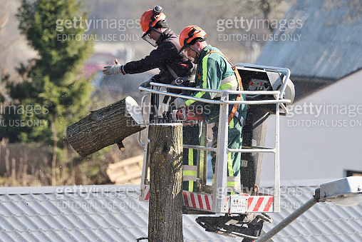 The workers with helmet working at height on the trees