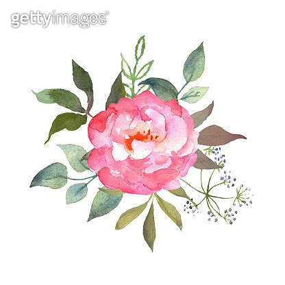 Floral watercolor set with pink rose. Botanical arrangements with flower and leaves. Great for printing on fabric, banners, invitations and cards. Vector.