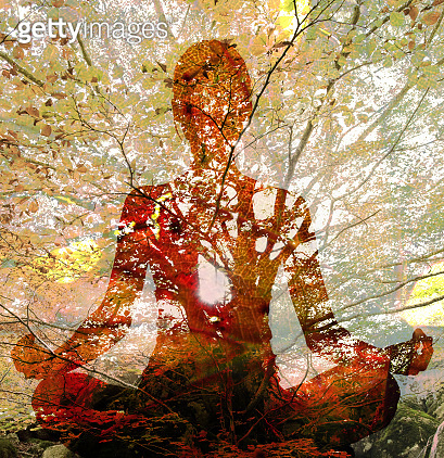 Silhouette of woman doing yoga in lotus position over tree. Concept of connection with the universe and nature.