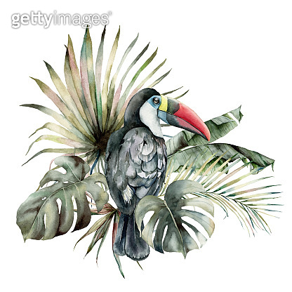 Watercolor tropical card with toucan and palm leaves. Hand drawn banana, coconut and monstera leaves. Floral illustration isolated on white background for design, print or background. Summer template.