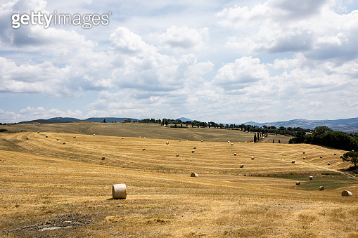 Tuscany landscape in summer time - wave hills, cypresses trees and beautiful blue sky.