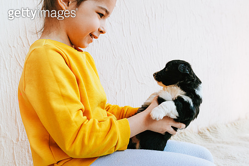 Side view shot of the happy child playing at home with little dog. Pretty little girl cares about the puppy. Kid playing her pet at the carpet in the room on a sunny day.