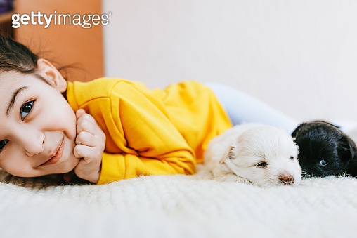 Closeup horizontal image of adorable child has joyful expression playing at home with little dogs. Pretty little girl cares about the puppies. Adorable kid playing with pets at the carpet in the room.