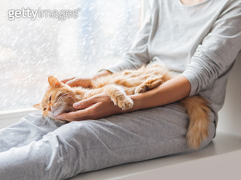 Cute ginger cat lying on woman's knees. Woman in grey pajama strokes fluffy pet. Cozy morning at home while snow is falling outside.