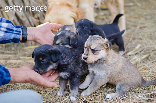 Little puppies playing with people in farm petting zoo
