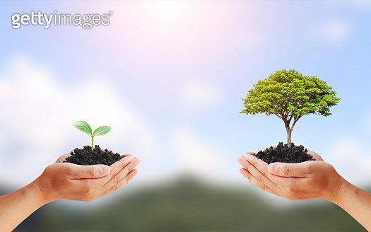 Tree exchange in human hands, concept of earth day and environmental conservation.