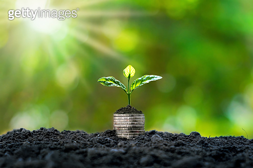 Plant trees on coins and soil. Money and investment growth ideas.