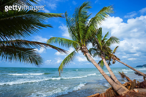 Beautiful daytime over Coconut tree with the sea the horizon at Hat chao lao beach in Chanthaburi Thailand.
