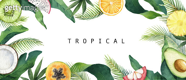 Watercolor vector composition of green tropical leaves and fruits.