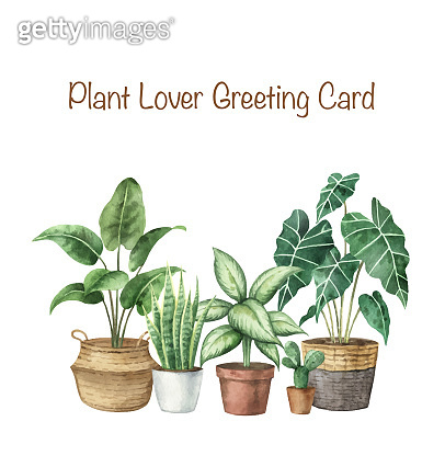 Watercolor vector set with home plants in ceramic pots. Plant lady card. Hand painted illustration for decor, stationary, postcards, packaging, invitations, kitchen and gardening. Decorative collection isolated on white background.