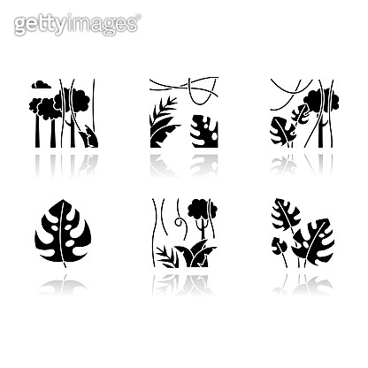 Rainforest plants drop shadow black glyph icons set. Evergreen forest vines. Swiss cheese plant. Indonesian jungle. Discovering Bali nature. Exploring tropical flora. Isolated vector illustrations