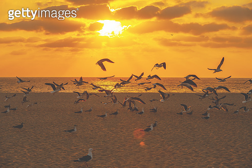 Seascape in the evening. Sunset over the sea. Seagulls flying on the beach. Atlantic ocean in the evening. Porto, Portugal, Europe