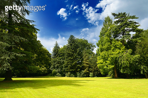 Picturesque landscape of bright sunny meadow