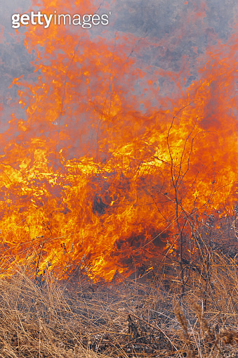 Orange fire and smoke burning grass in farming field. Close-up view natural wildfire background