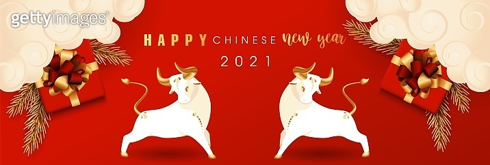 2021 Chinese New Year of bull. Symbol of coming year with realistic gifts box and gold lush branch pine. Traditional horizontal poster in oriental style with ox and clouds. Vector stock illustration.