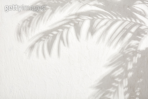 The shadows of the leaves on a white plastered wall stock photo