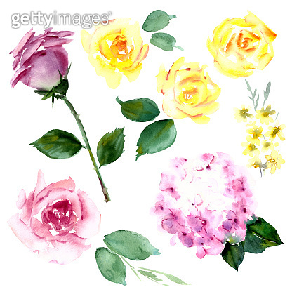 Hand drawn watercolor flowers set.