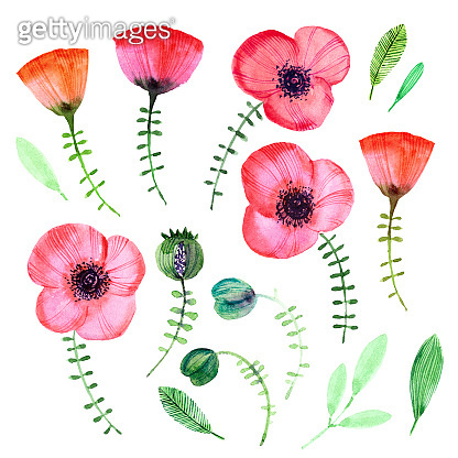Vector watercolor flower set