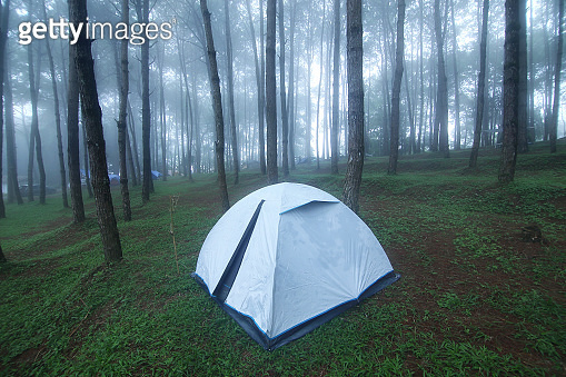 Outdoor camping tent among pine forest and misty in rainy season at Phu Hin Rong Kla national park, Pitsanulok province in Thailand. Travel and natural Concept