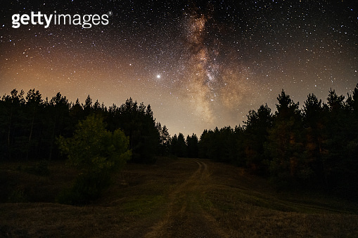 Night landscape , beautiful starry night in the forest and bright milky way galaxy. Beauty in nature.