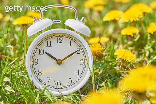 White vintage alarm clock in the grass with dandelion flowers. Deadline and change time concept