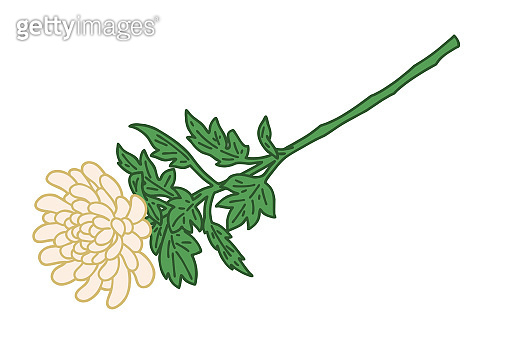 Vector illustration of National. Chrysanthemum illustration. Joe, memorial, funeral.