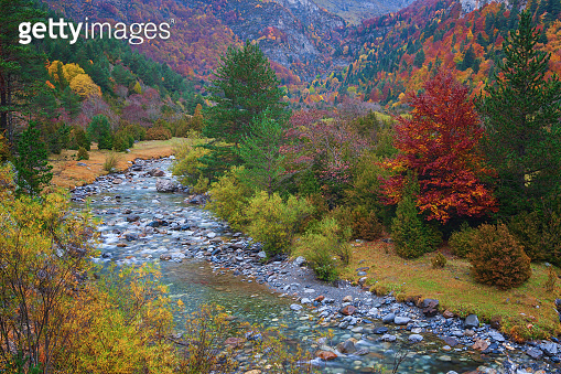 Beautiful autumn landscape, with large trees and colors saturated by rain, in the background the Ara river in the Bujaruelo valley, Ordesa and Monte Perdido National Park, Huesca, Spain
