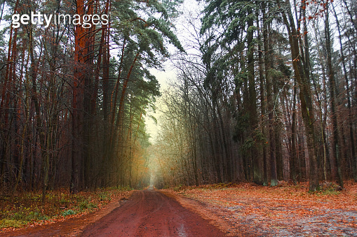 Autumn beautiful landscape with road. Autumn forest