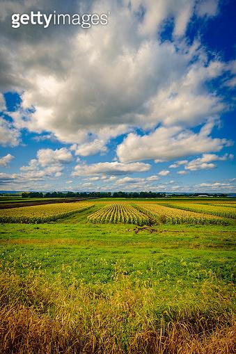 Cloudscape Farm Horizon
