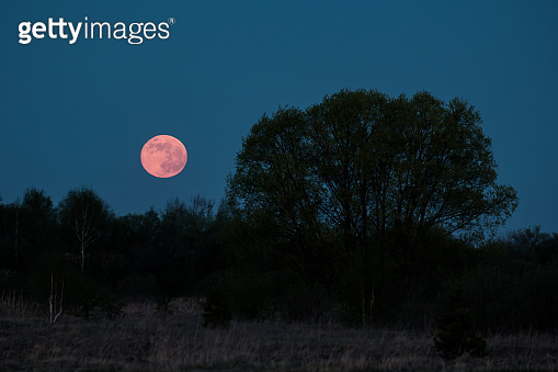 silhouette of a tree in the night and a full red moon