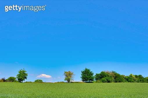 Rural idyllic landscape scenery view with green meadows and blue sky on a sunny spring day