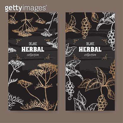 Two labels with Yarrow and Schisandra or magnolia vine sketch on black. Herbal collection series.